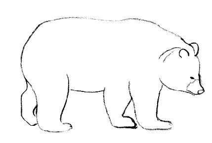 Ours grizzli ours dessins pinterest - Comment dessiner un ours ...