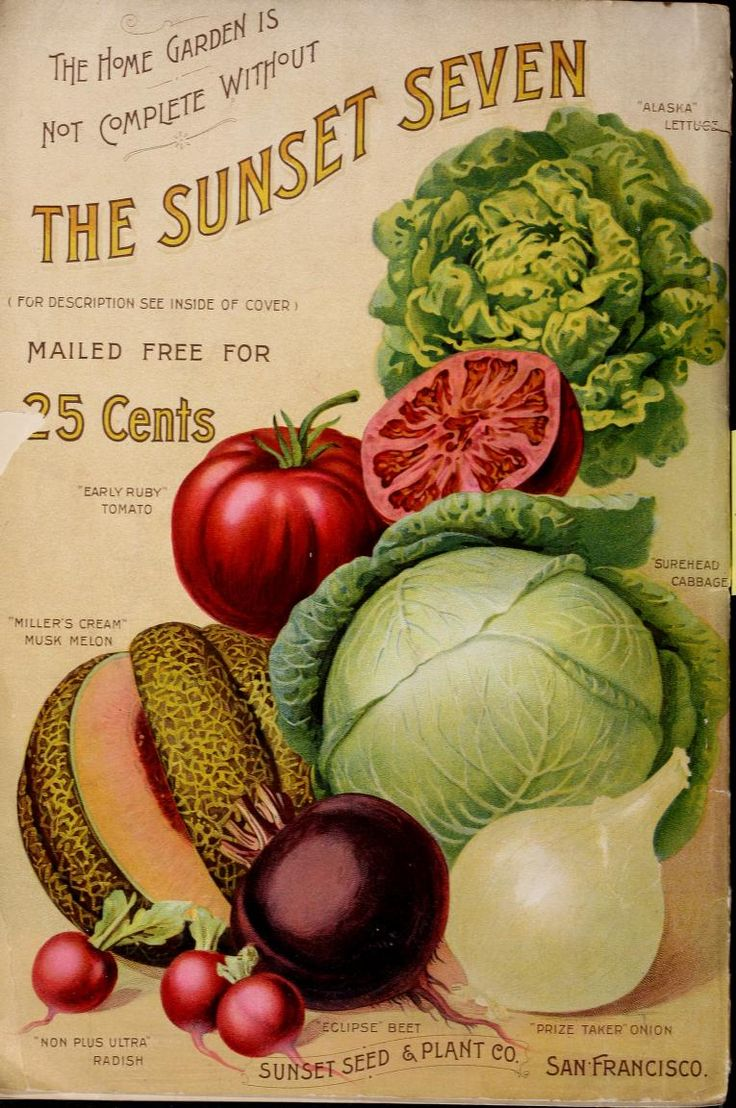 Sunset Seed & Plant Co. back cover 1895