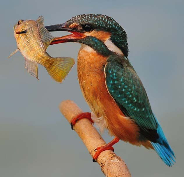 176 Best Oiseaux Images On Pinterest