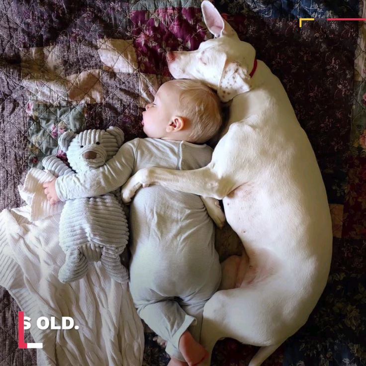 This adorable sleeping baby is best friends with his dogs.