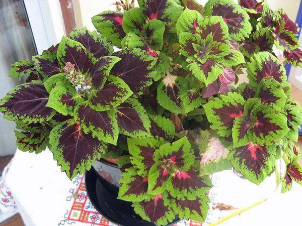 Overwintering Annual Plants Indoors   Garden Harvest Supply