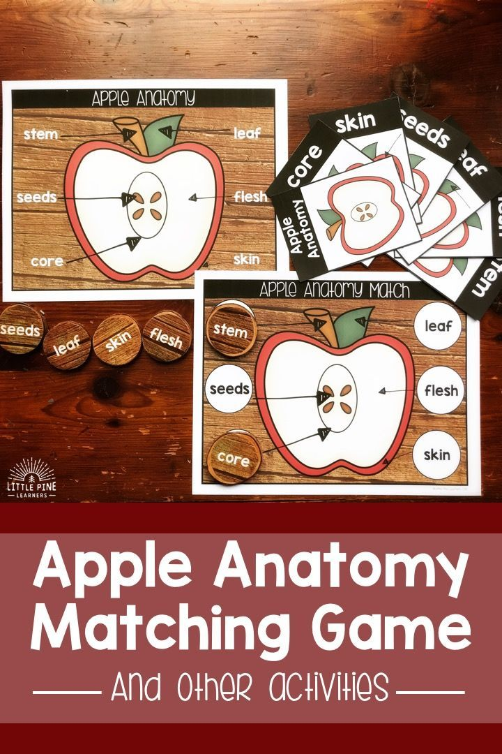Apple Anatomy And Life Cycle Activities All Things Homeschool