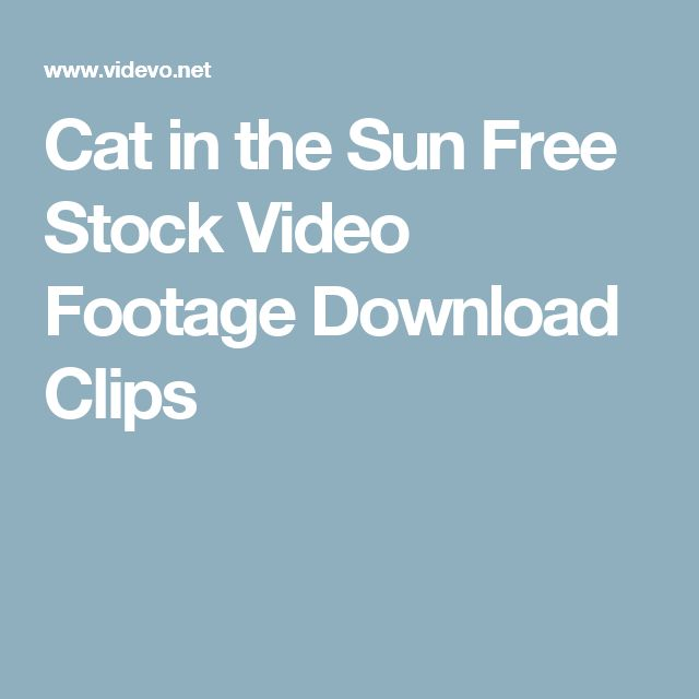 Cat in the Sun  Free Stock Video Footage Download Clips