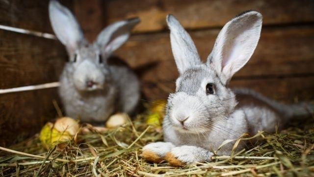 So machen Sie Ihren Kaninchenstall winterfest