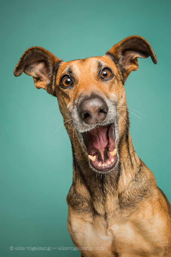 It's a girl!! by Elke Vogelsang on 500px