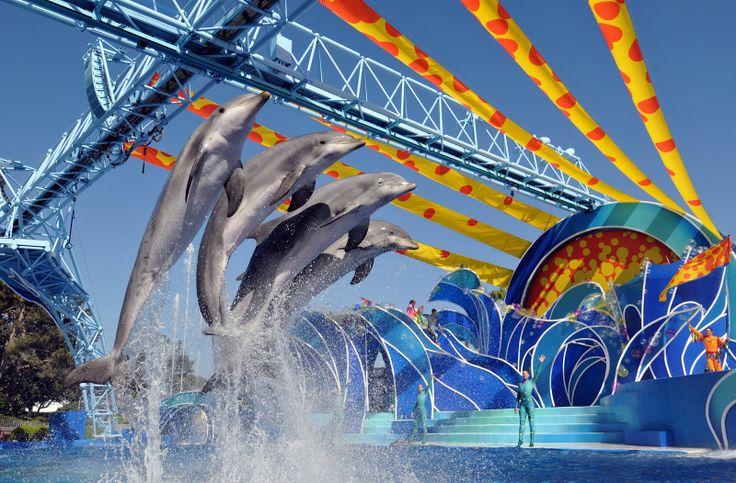 Perfekt inszenierte Tiershows in SeaWorld