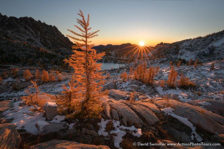 Morning Larch by David Swindler on 500px