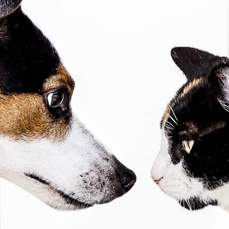 окрошка собаки лучше чем кошки картинки картины любой