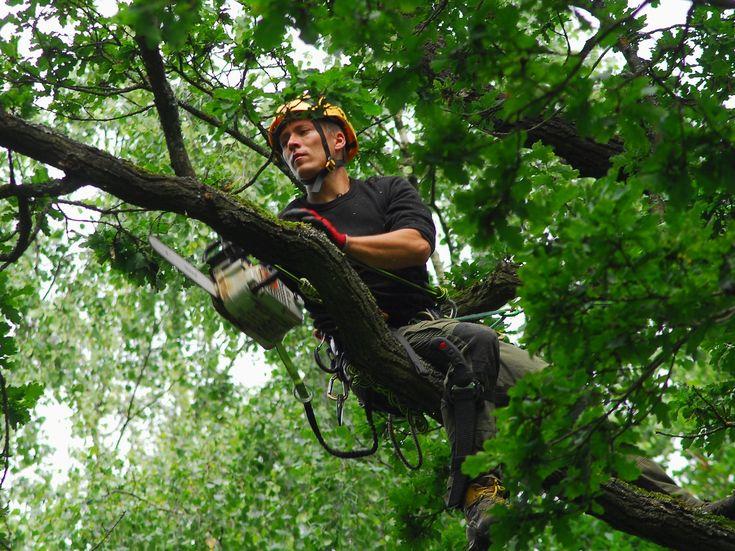 V Nepomuku kácejí staré, ale i vysazují nové stromy