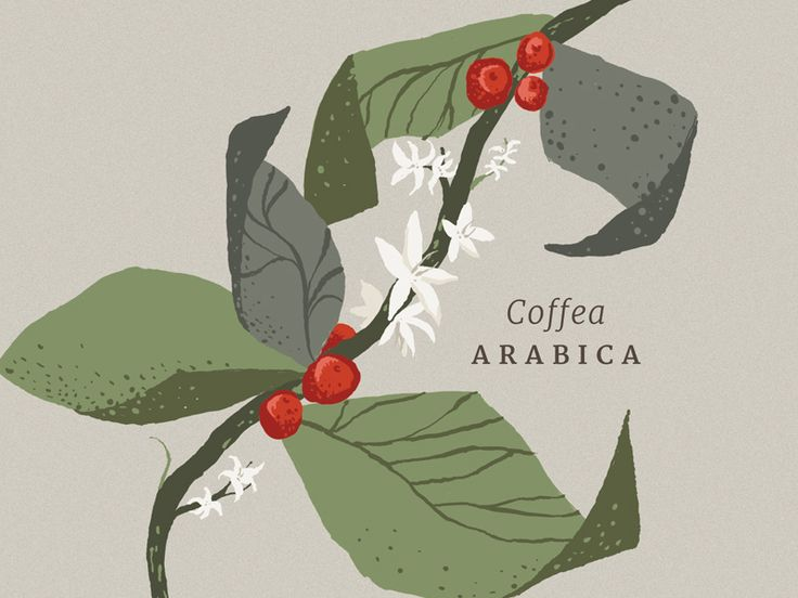 Coffee Illustration                                                                                                                                                      Más