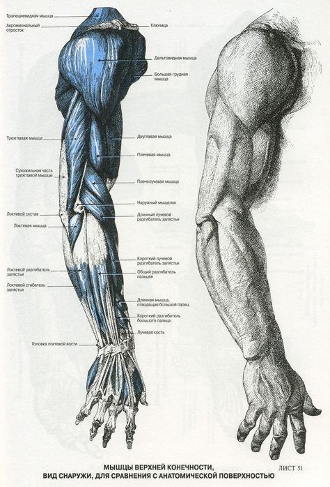 Préférence Oltre 25 splendide idee su Anatomia del braccio su Pinterest  BB75