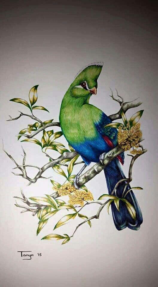 Ballpoint Pen drawing Birds art