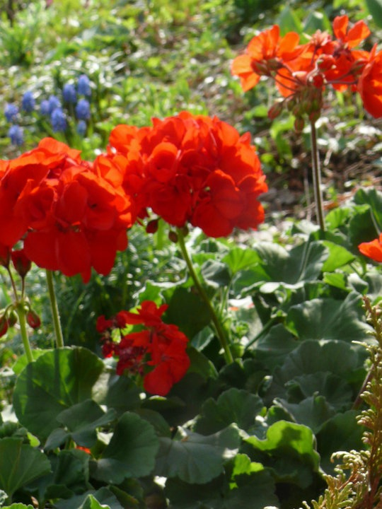 1322 Best Images About Flower Garden Pictures On Pinterest