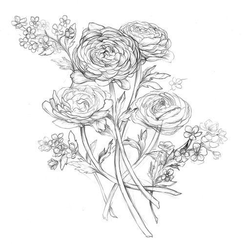 Ranunculus Drawing Google Search Jenny Bo Tattoo