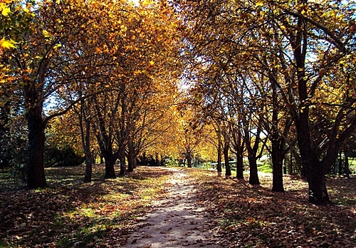 Autumn in Orange, NSW