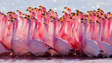 15 Fascinating Flamingo Facts