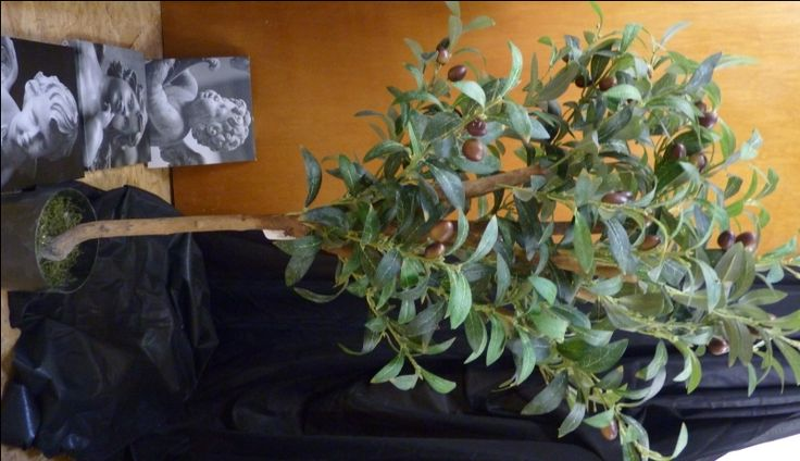 Olivenbaum getopft * Hochwertige Floristenqualität * 90 cm