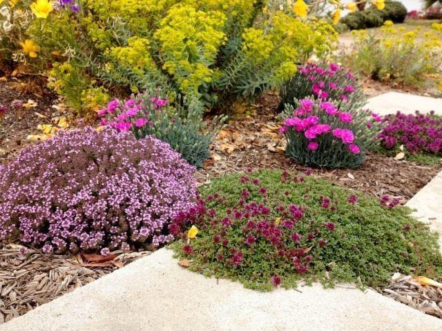 8 растений для цветника, не требующих полива. Список названий с фото - Ботаничка.ru - Страница 2