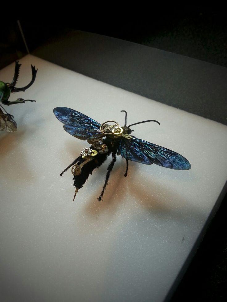 steampunk insect  insecte mécanique guêpe Vespa asiatique
