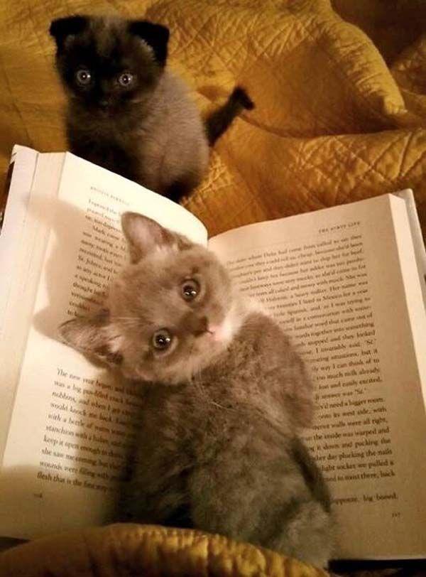 暇人/(^o^)\速報: 【画像あり】猫「読書の秋ですね」