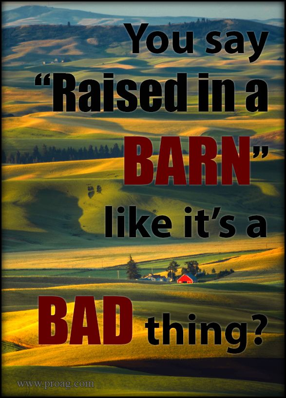 "You say, ""You act like you were raised in a barn"" like's it a bad thing? Some of life's most important lessons were learned in a barn..."