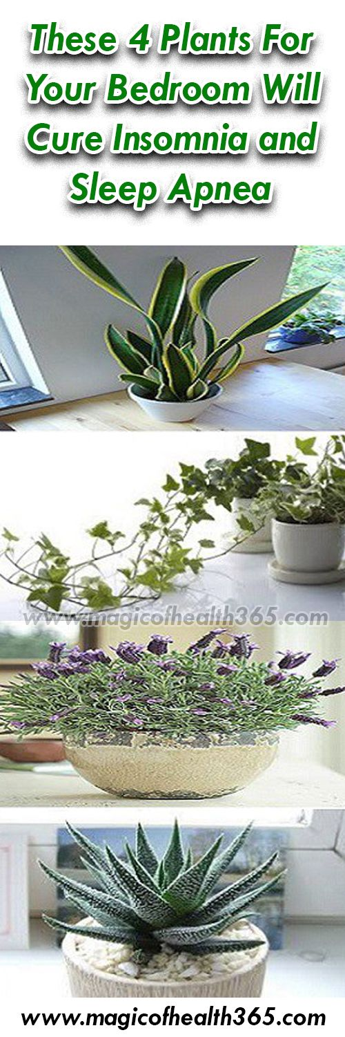 These 4 Plants For Your Bedroom Will Cure Insomnia and Sleep Apnea