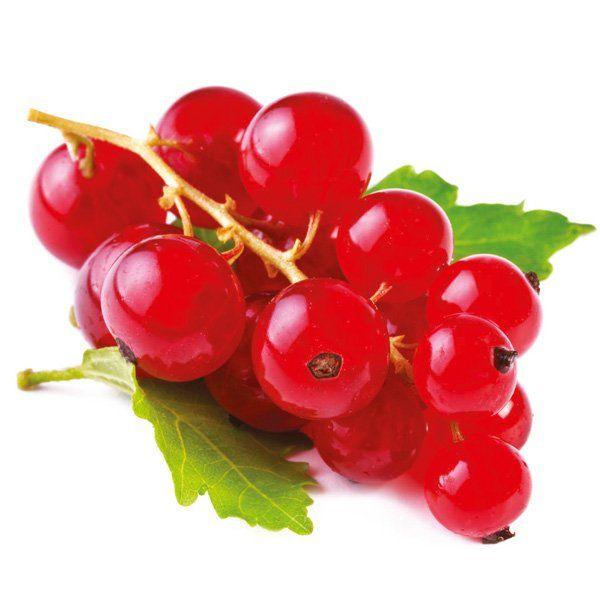 Porzeczka czerwona - Ribes Rubrum 'Jonkheer Van Tets'