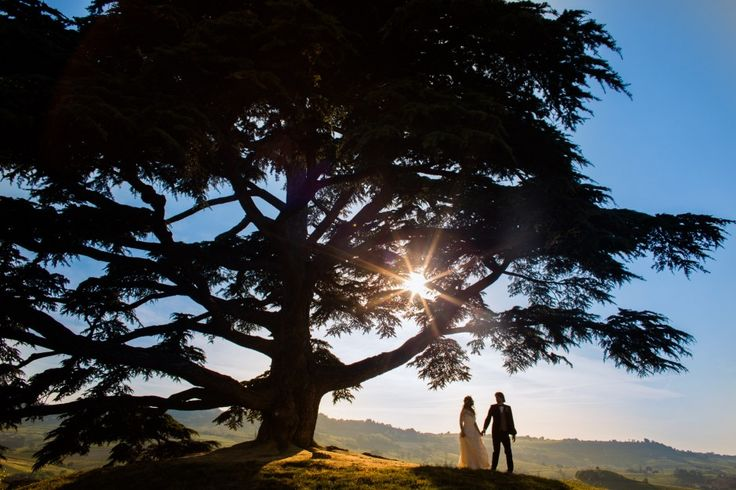 Il cedro del Libano a La Morra - piantato nel 1856 da due sposi il giorno del loro matrimonio / Lebanon cedar in La Morra - planted in 1856 by a couple in the day of their wedding