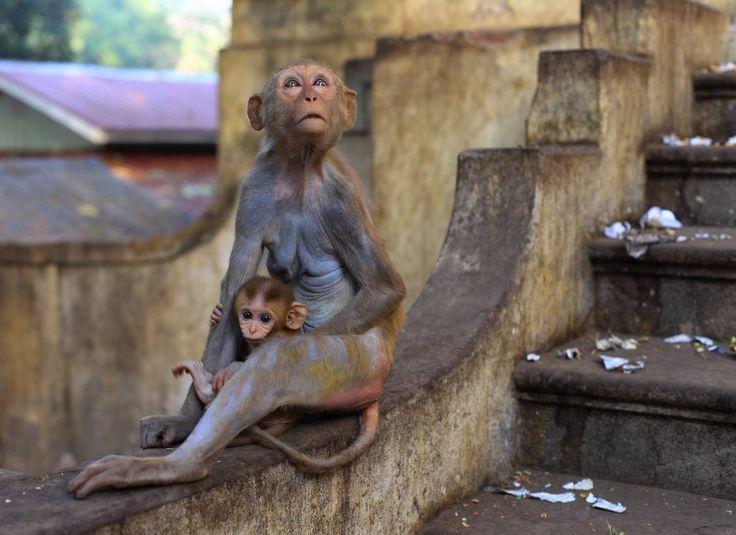 Russian photographer Anastasiia Usoltceva's photo of two wild monkeys in Myanmar.
