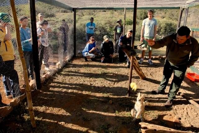 Mount Camdeboo offers the very best family holiday you can imagine; a time to relax and enjoy special time with your family, to reconnect and share the excitement with your children as they discover Africa, up close! Here the kids can have some fun at the Small Cat Breeding Project. Book today for the school holidays.