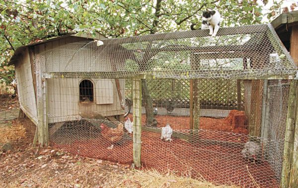 The Best article I've read/seen on how to use animals (chickens/ducks/rabbits) to create eggs, compost, etc. it is a full circle of green living.