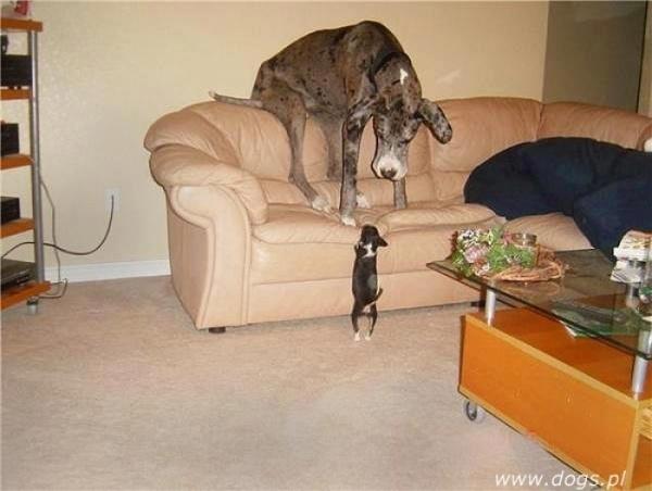 Zabawne, śmieszne psy