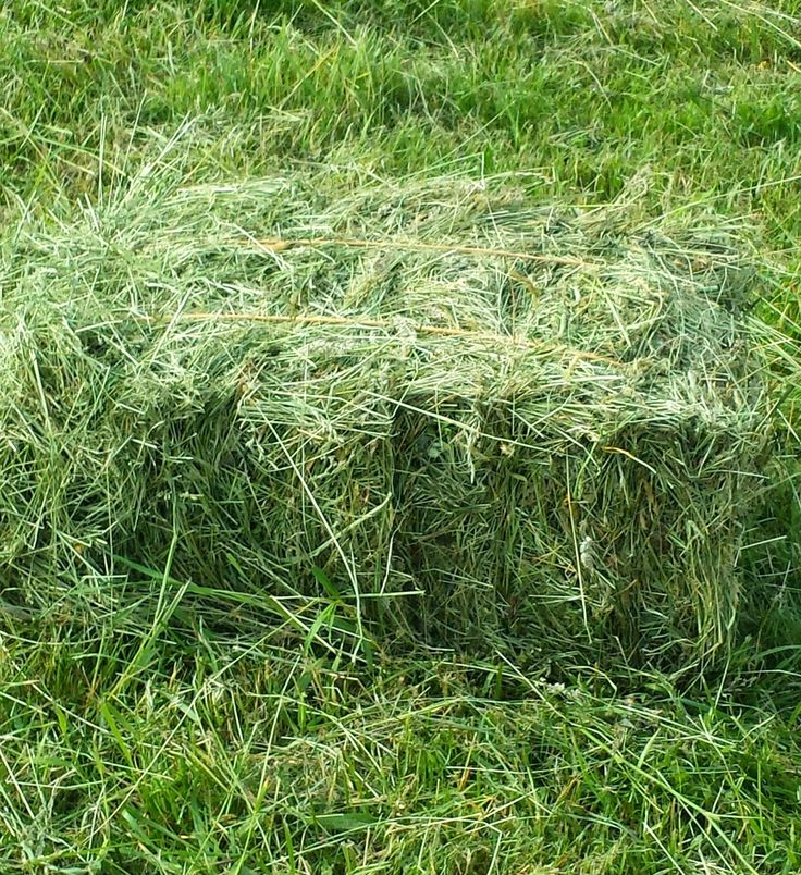 Halfway Oak Farm: Baling Your Own Hay: Reasons To Do It