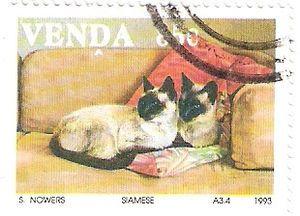 Siamese Cat (Felis silvestris catus)