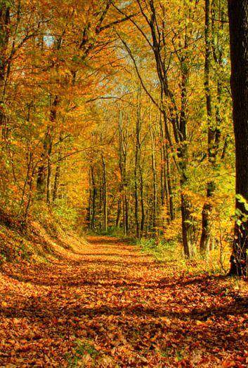 Avanzar sobre las hojas caídas de los árboles en el otoño es una experiencia maravillosa #Autumn #OtoñoTriples