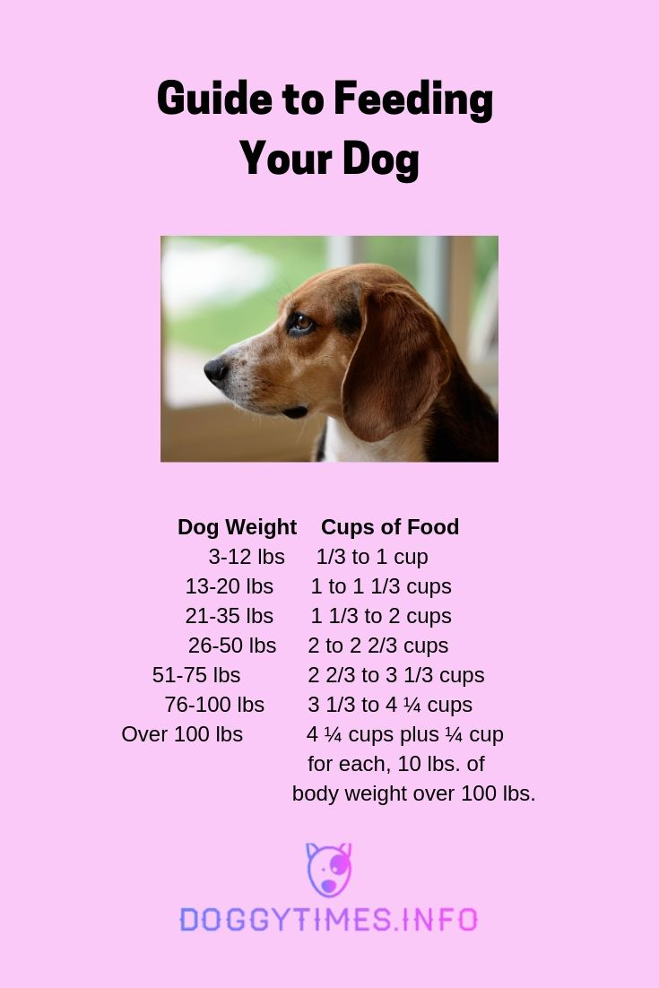 How To Figure Out How Much To Feed My Dog With Images Dog