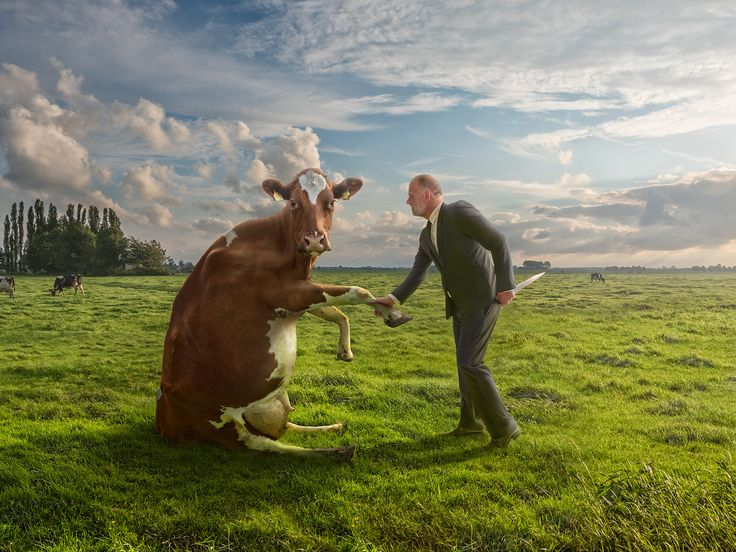 No, it's not about food... it's about politics and politicians ;) #500PX #Photography #Picture   Models: Marco ter Beek and uhh... Clara the Cow ;)