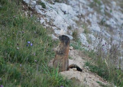 Lei è la nostra marmotta preferita