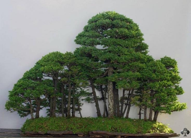 Wonderful forest landscape, image by Michael Bonsai. #bonsai