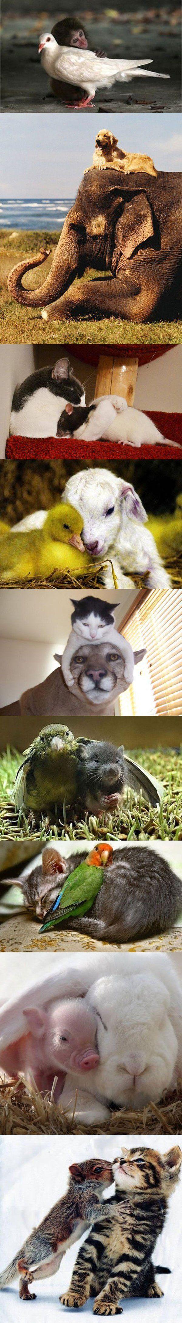 Die ungewöhnlichsten Tierfreundschaften | Webfail - Fail Bilder und Fail Videos