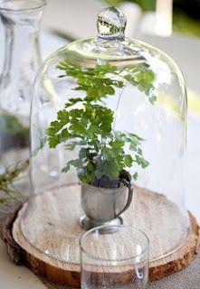 cloche verre + plantes