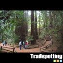Muir Woods and Tourist Club Loop