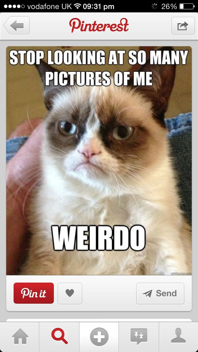 """""""Stop looking at so many pictures of me, weirdo."""" by sarcastic Grumpy Cat."""