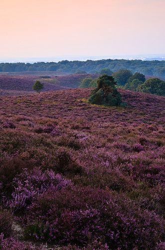 Van idee tot realisatie: Heide in bloei fotograferen