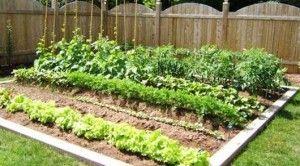 Consejos para hacer un huerto ecológico en cualquier lugar