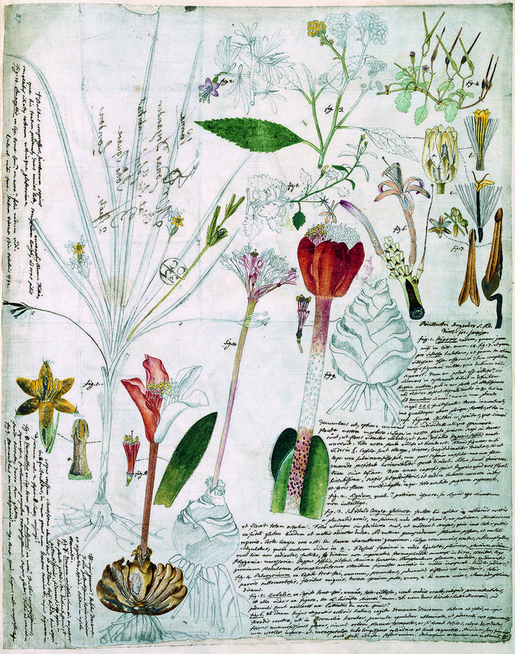 Nikolaus Joseph von Jacquin and Johannes Scarf, Various flowering plants, 1792. (Photo: Natural History Museum, London/ Science Photo Library/ Courtesy Plant: Exploring the Botanical World, Phaidon 2016)