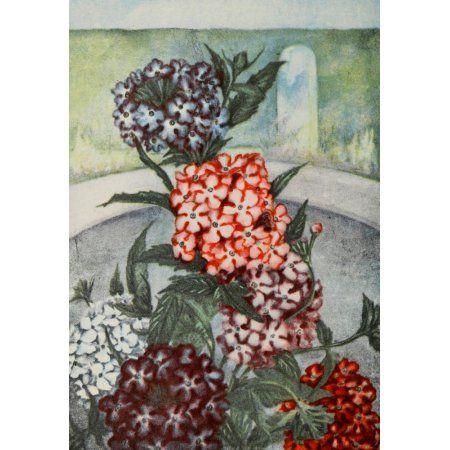 Garden Flowers 1926 Verbena Canvas Art - Myron Van Brunt (24 x 36)