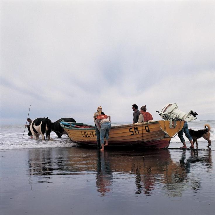 mar chileno - Google Search