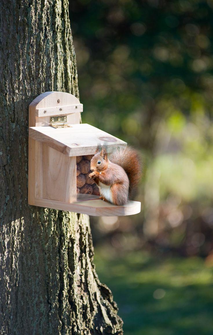 20 best Bird Tables and Bird Baths images on Pinterest | Bird baths ...