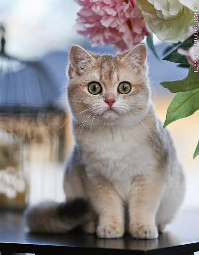1000+ images about Cat Eyes on Pinterest   Orange kittens, Kitty cats ...